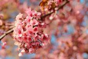 春のお出かけ