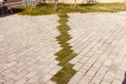 芝生のライン
